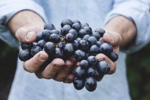 I frutti del Content Marketing